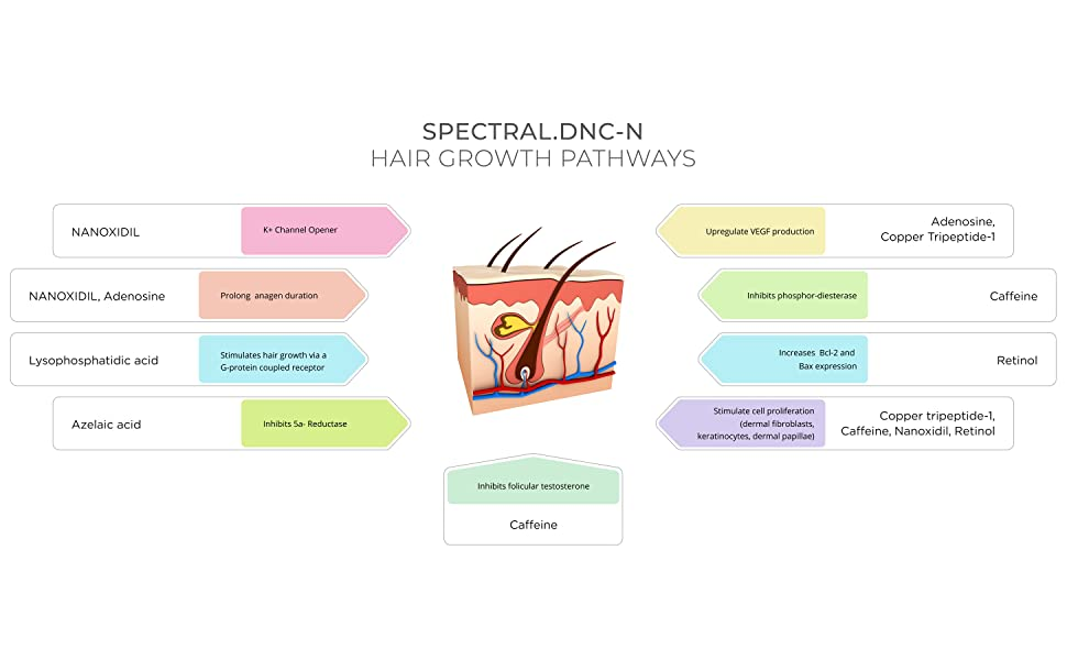 How Spectral DNC-N Works